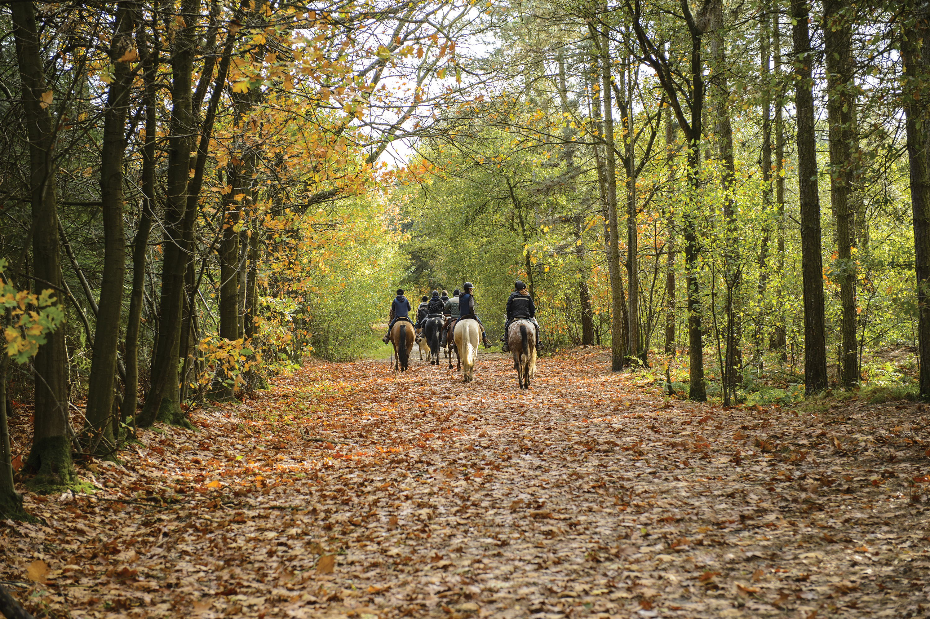 Go for a horseback ride on the vast Estate grounds