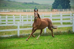 Our Equestrian horses