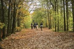 Go for a horseback ride on the vast Estate grounds